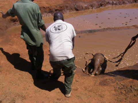 Доброта дня: спасение слоненка