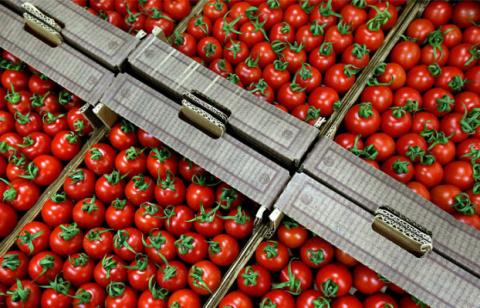 Турецкие торговцы томатами п…