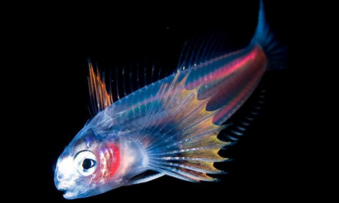 Житель Пскова испугался рыбы, купленной в местном магазине – она светилась
