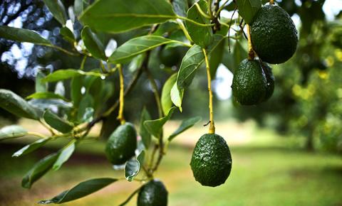 От куркумы до авокадо: лучши…