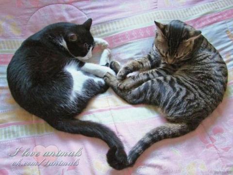 Несколько кошек в одном доме, или Почему две или три кошки лучше, чем одна.