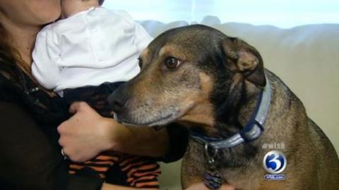 Приютская собака спасла дочь…