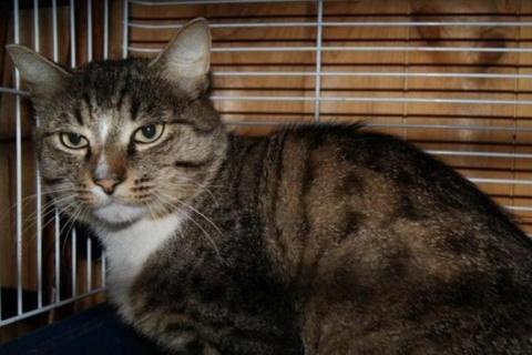 Уральский кот прошел 50 кило…