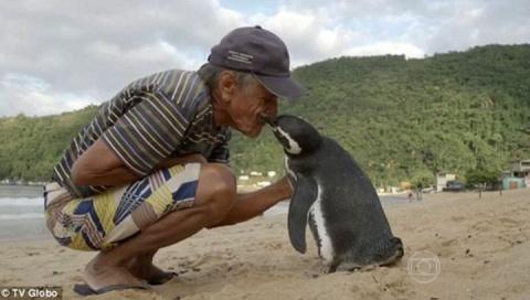 Пингвин ежегодно проплывает 5000 километров, чтобы встретиться со спасшим его человеком