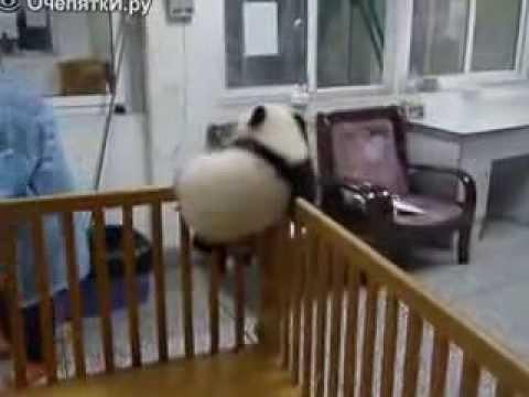Малыш пытается сбежать, но...