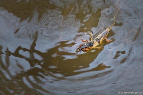 Вешние дни и воды в фото