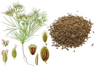 Специи  и пряные травы. Часть XI