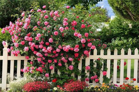 Хлебная и травяная закваска - отличное удобрение для роз