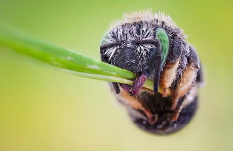 Вот как спят пчелы и осы