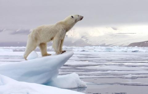 Про убийство белого медведя.