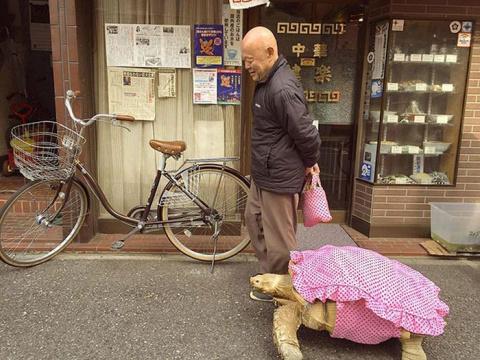 Пожилой японец выгуливает свое экзотическое домашнее животное