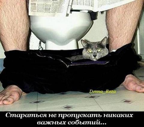 Обязанности кота по дому в картинках