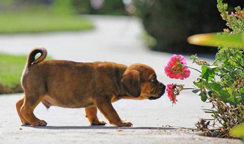 Удивительные факты о запахах