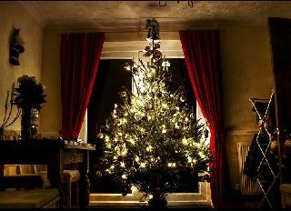 Как сохранить новогоднюю елку (ФОТО)