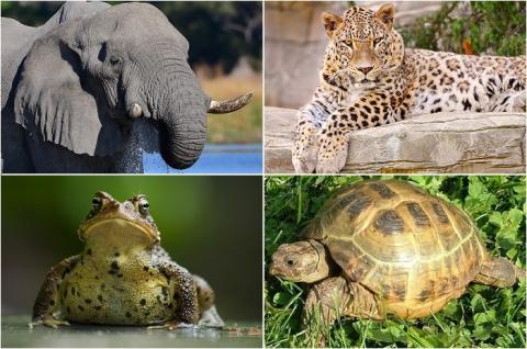 20 похожих животных, которых часто путают непрофессионалы