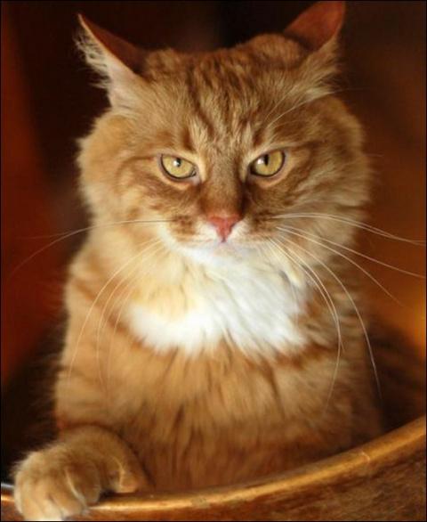 Война с котом. Как я пыталась обезопасить себя от кошачьего терроризма…