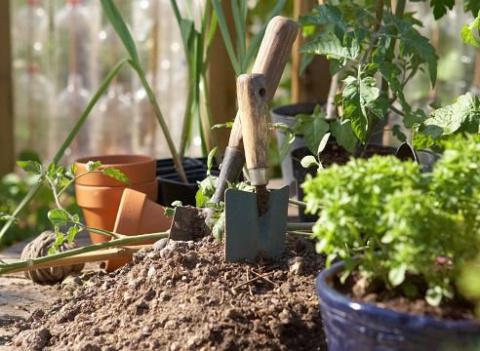 О чем мечтают растения: идеальные грунты готовим сами!