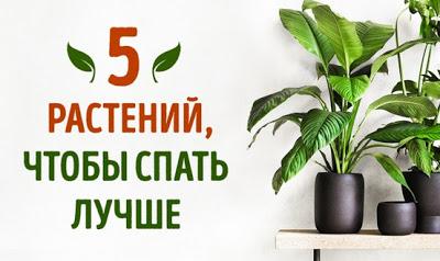 5 растений, которые помогут …