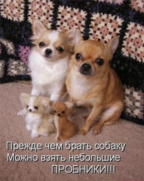 тайная жизнь домашних животн…