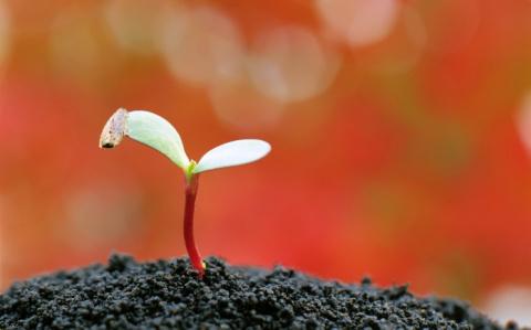 Повышение плодородия почвы. Минеральные или органические удобрения?