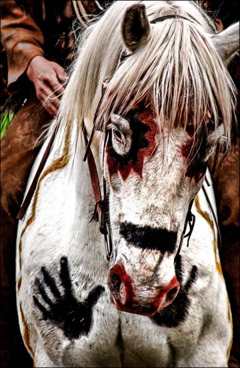 Боевой конь индейца