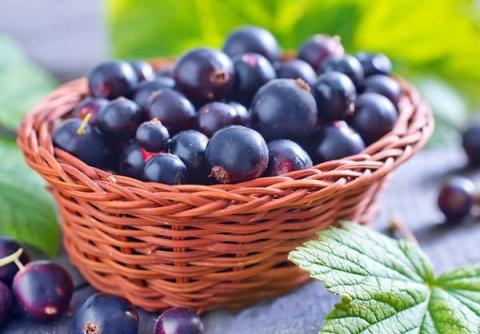 Черная смородина: секреты сладкого урожая
