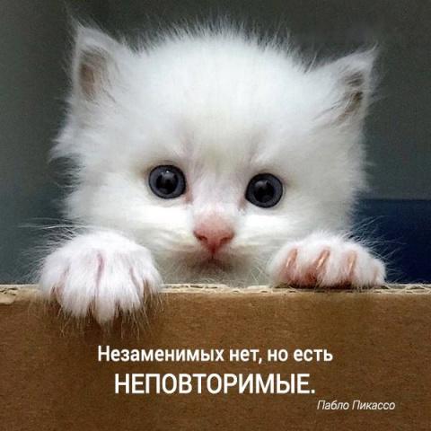 Очередная подборка кошачьих …
