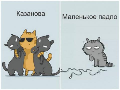 12 типов котов: найдите сред…