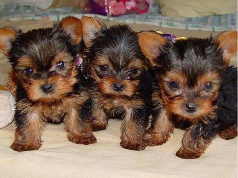 10 собак, которые подойдут аллергику