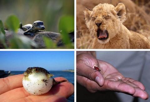 Опасно выглядящие животные, которые относительно безобидны
