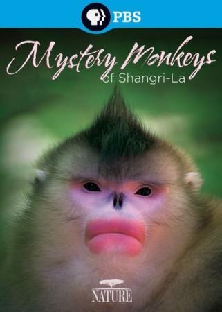 Загадочные обезьяны Шангри-Л…