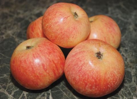 Яблоки Шафран