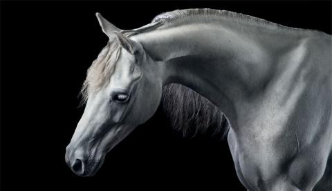 Потрясающие работы девушки, которая исполнила мечту детства и стала конным фотографом