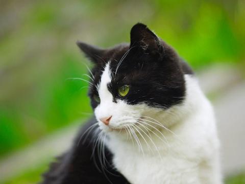 28 вопросов и ответов о котах