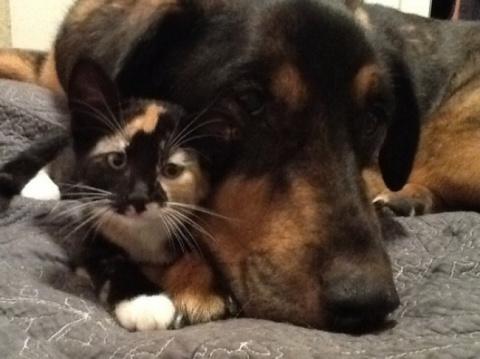 """""""Они были неразлучны... А когда пес умер, я не знал, как утешить кошку"""""""