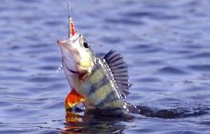 1457. Рыболовный спорт России .