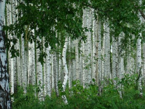Красота русской природы в фо…