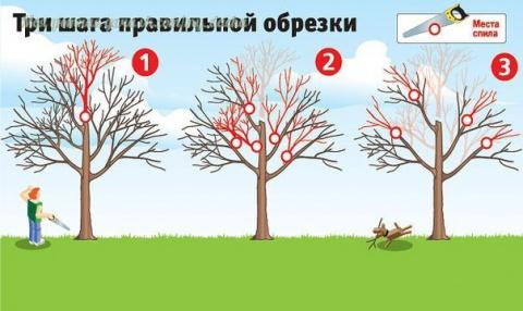 Как вернуть деревьям былую с…