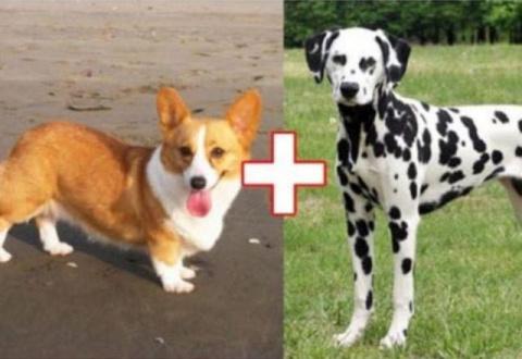 Собачьи эксперименты: 10 гибридов собак, полученных в результате сумасшедших скрещиваний
