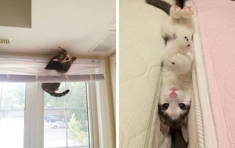 14 котов, которые не понимаю…