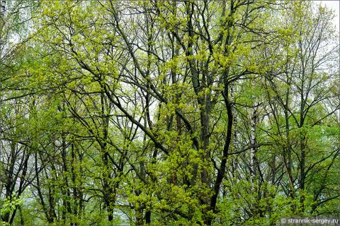 Весна в загадочной стране Кольцо Радогостья