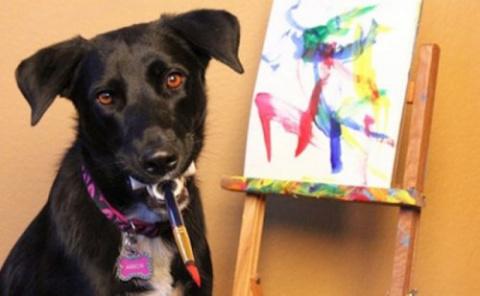 Пёс Арбор рисует картины, чтобы помочь бездомным животным