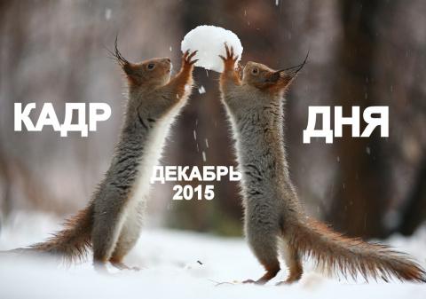 Кадр дня: Шапка для хозяина!))