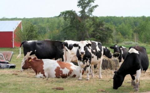 Органические удобрения: виды, применение, ошибки