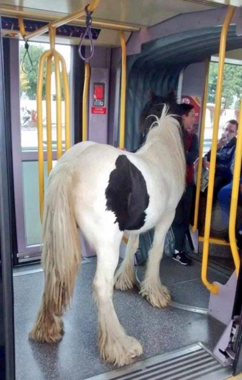 В ирландском трамвае прокатилась лошадь