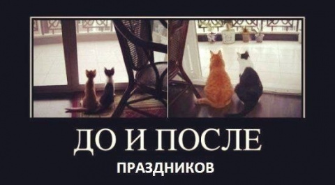 Наши забавные друзья 6.