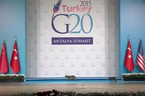 Кошки стали звёздами на саммите «Большой двадцатки»