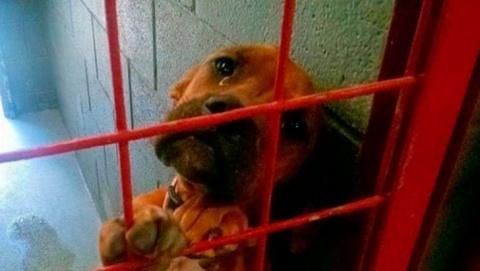 Этот снимок несчастной собак…