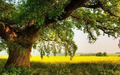 Сила деревьев