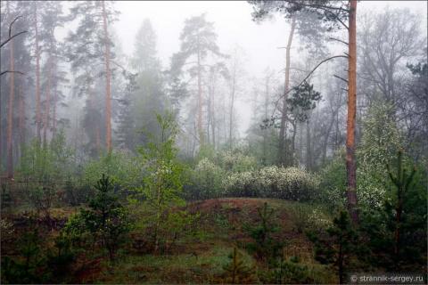 Волшебный лес Big